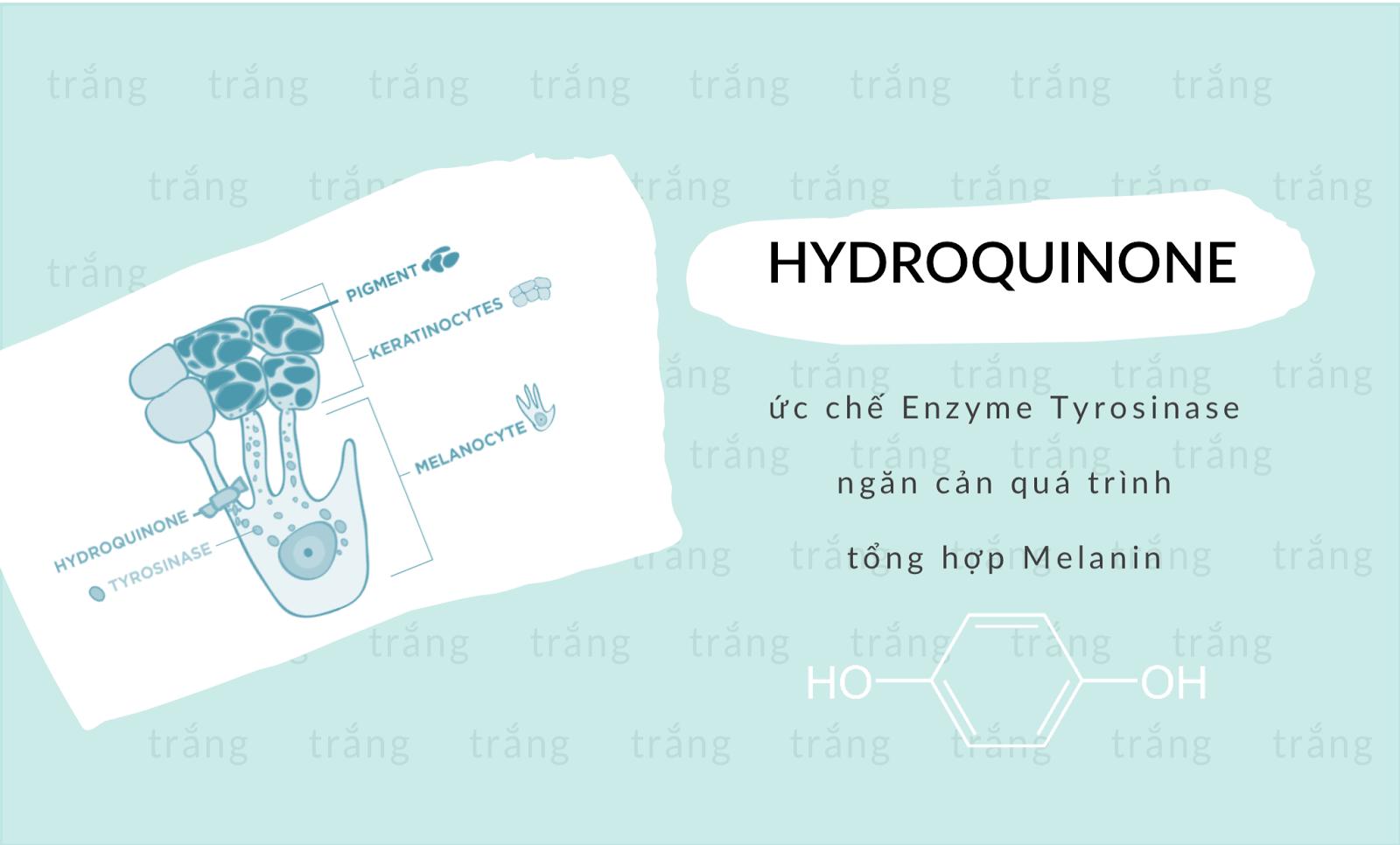 hydroquinone ngăn cản hình thành melamin